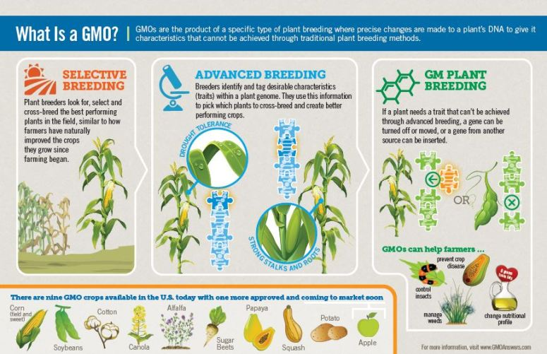 what_is_gmo_oct_2015